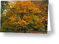 Autumn Tree At Lafayette Park Greeting Card