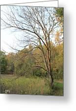 Autumn Tree At Sunset Light Greeting Card