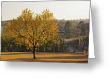 Autumn Tree At Sunset Greeting Card