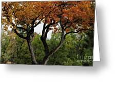 Autumn Tree II Greeting Card