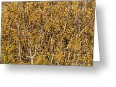 Autumn Tree Tangle Greeting Card