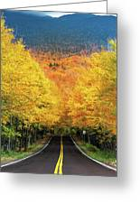 Autumn Tree Tunnel Greeting Card