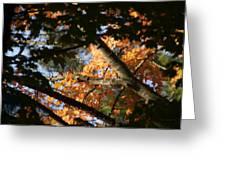 Autumn Trees 2015 Pa 01 Greeting Card