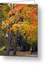 Autumn Trees In Park Greeting Card