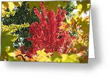 Autumn Trees Landscape Art Prints Canvas Fall Leaves Baslee Troutman Greeting Card