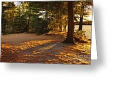Autumn Trees Near Lake Greeting Card
