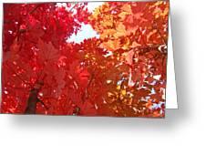 Autumn Trees Red Orange Fall Trees Art Baslee Troutman Greeting Card