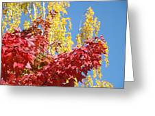Autumn Trees Red Yellow Fall Tree Blue Sky Landsape Greeting Card