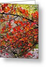 Autumn Trees Rock City Greeting Card