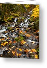 Autumn Tumbles Down Greeting Card