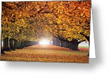 Autumn Tunnel Greeting Card