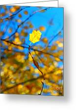 Autumn Twist Greeting Card