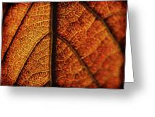 Autumn Veins Greeting Card