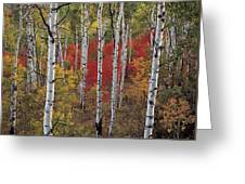 Autumn Warm Greeting Card