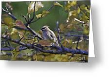 Autumn Waxwing 2 Greeting Card
