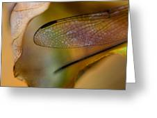 Autumn Wing Greeting Card
