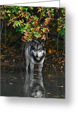 Autumn Wolf Greeting Card