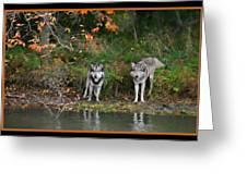Autumn Wolf Study  Greeting Card