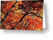 Autumn Wonder Greeting Card
