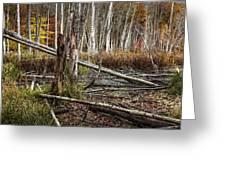 Autumn Woodland Marsh Scene Greeting Card