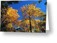 Autumn Yellow Foliage On Tall Trees Against A Blue Sky In Palermo Greeting Card