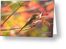 Autumn Yellow Rumped Warbler Greeting Card