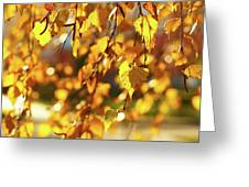 Autumnal Curtain Greeting Card