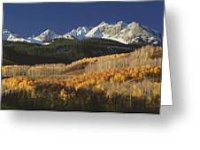 Autumnal View Of Aspen Trees And The Greeting Card