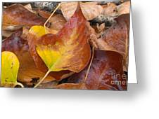 Autumns Color Palette Greeting Card