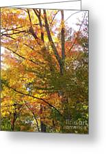 Autumn's Gold - Photograph Greeting Card