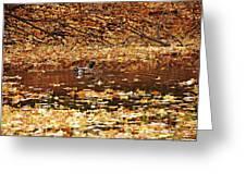 Autumns Mallards Greeting Card