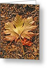 Autumn's Textured Maple Leaf Greeting Card