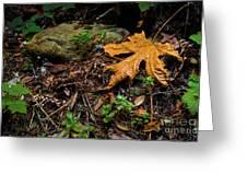 Autumn's Treasure Greeting Card