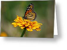 Autumn's Wings Greeting Card