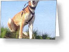 Ava-grace, Princess Of Arabia  #saluki Greeting Card