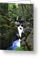 Avalanche Gorge Glacier National Park Greeting Card
