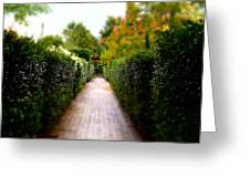 Avenue Of Dreams 2 Greeting Card