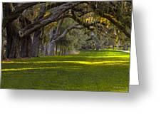 Avenue Of Oaks 2 St Simons Island Ga Greeting Card
