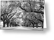 Avenue Of Oaks Charleston South Carolina Greeting Card