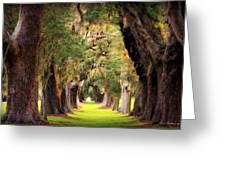 Avenue Of Oaks Sea Island Golf Club St Simons Island Georgia Art Greeting Card
