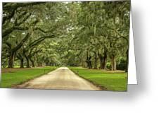 Avenue Of The Oaks Greeting Card