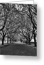 Avenue Of Trees Monochrome Greeting Card
