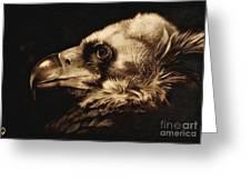 Avvoltoio Greeting Card