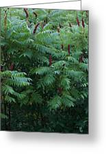 Awaiting The Sumac Greeting Card