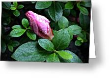 Awakening - Flower Bud In The Rain Greeting Card