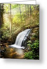 Awakening In The Forest Greeting Card