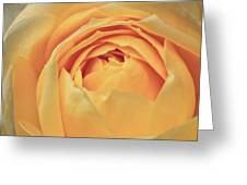 Awakening Yellow Bare Root Rose Greeting Card by Ryan Kelly