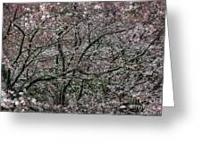 Awash In Cherry Blossoms Greeting Card