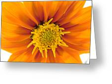 Awesome Blossom Greeting Card