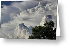 Awesome Cloulds And A Pine Tree Greeting Card